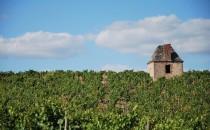 Vignes de la Mulonnière